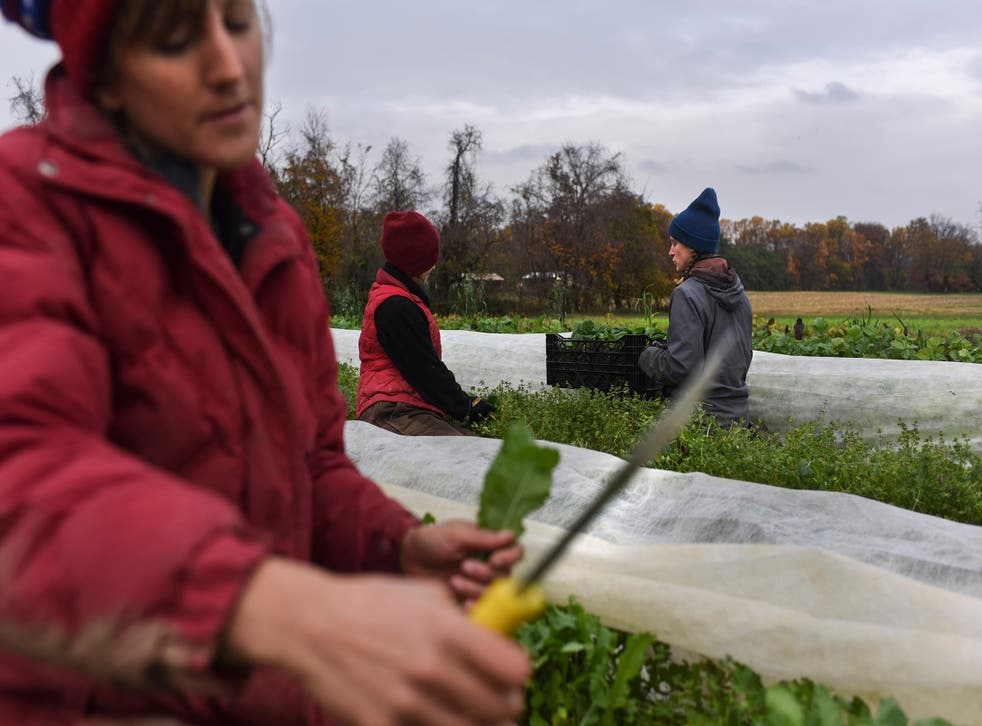 From left: Liz Whitehurst, Rachel Clement and Foster Gettys pick and weigh greens at Owl's Nest Farm, Maryland