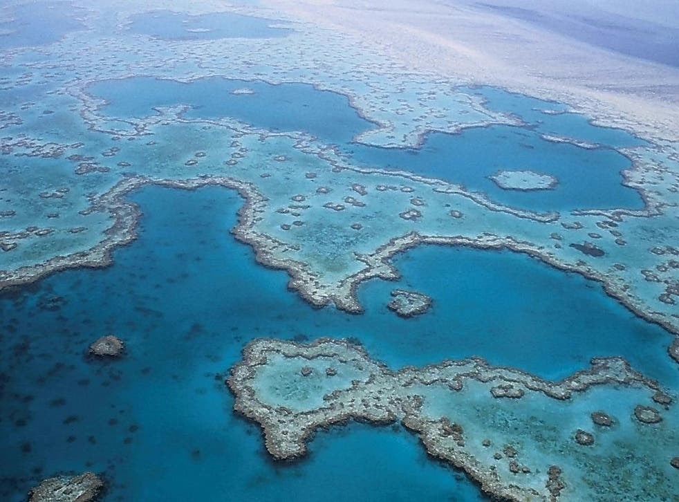 Expert Richard Fitzpatrick thinks there's still hope for the Great Barrier Reef
