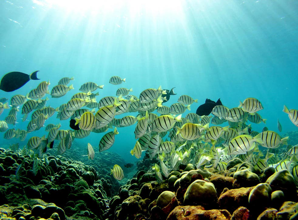 While the Great Barrier Reef is still under threat, certain healthy areas within it might have the capacity to restore it