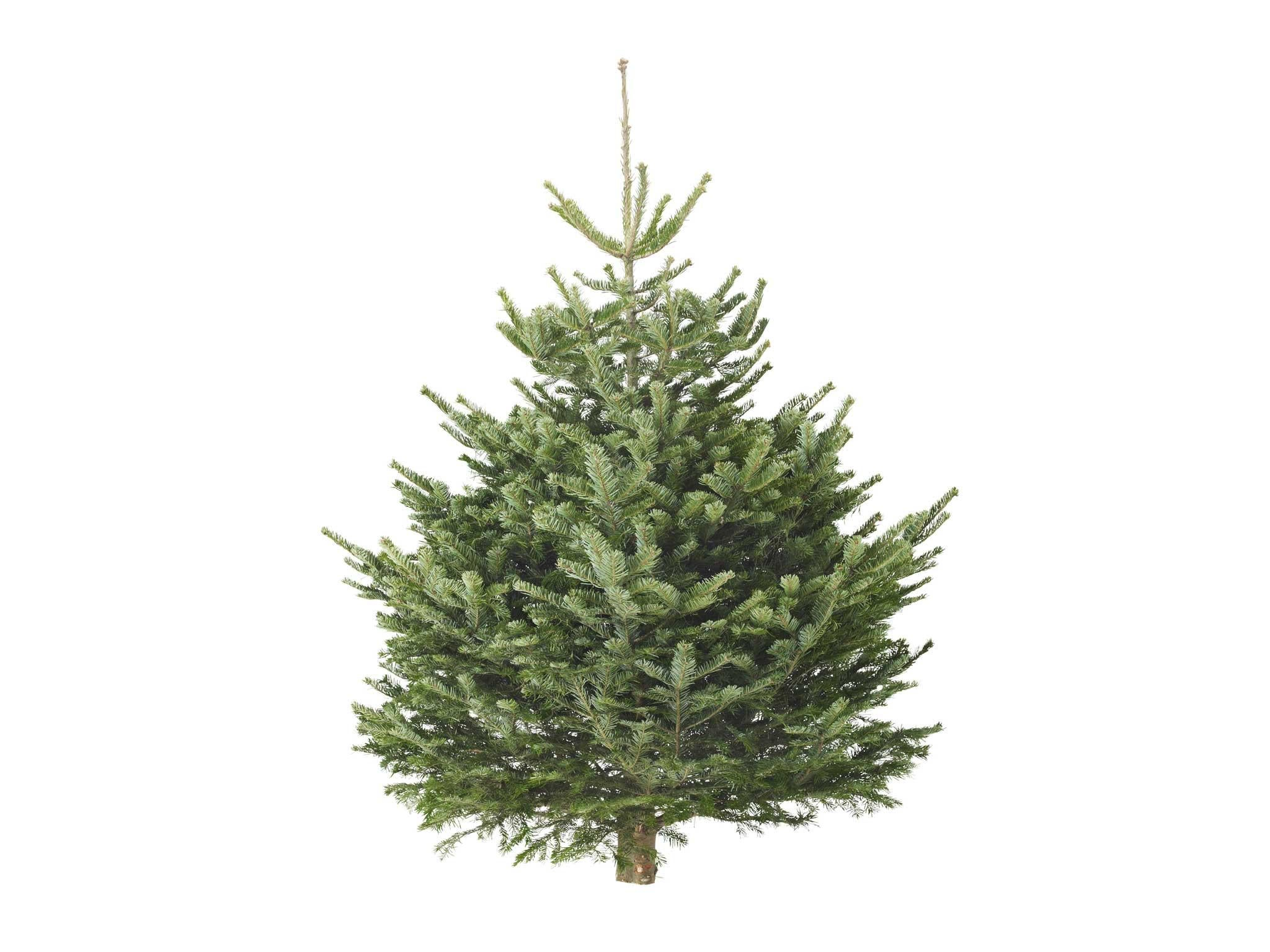 13 best real Christmas trees | The Independent