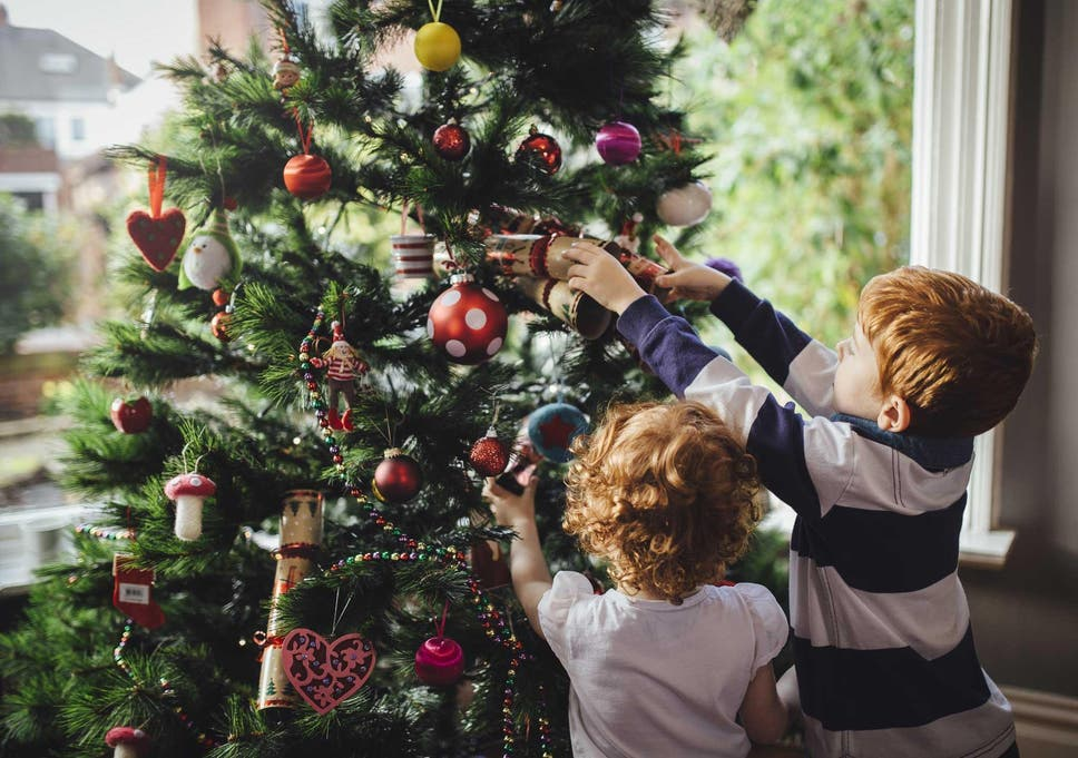 from the perennially popular nordman firs to more unorthodox options these are our festive favourites - How Long Do Real Christmas Trees Last