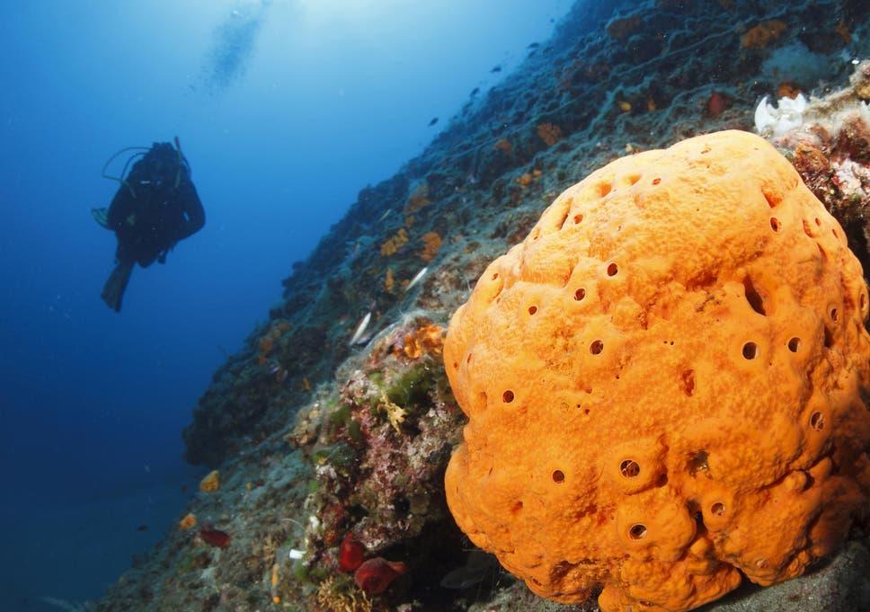 humans living underwater