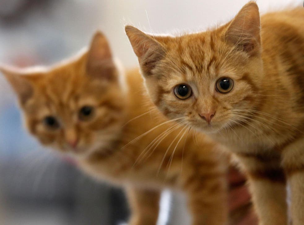More than 400 cats have been killed in a startlingly similar way since 2015