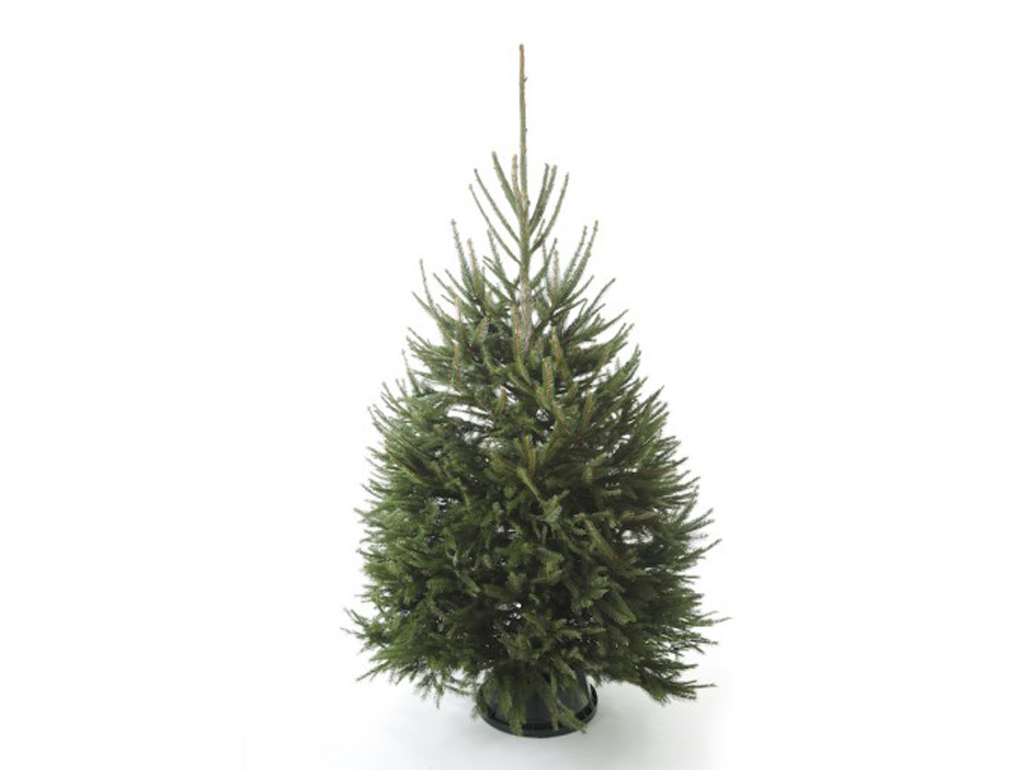 13 best real Christmas trees   The Independent