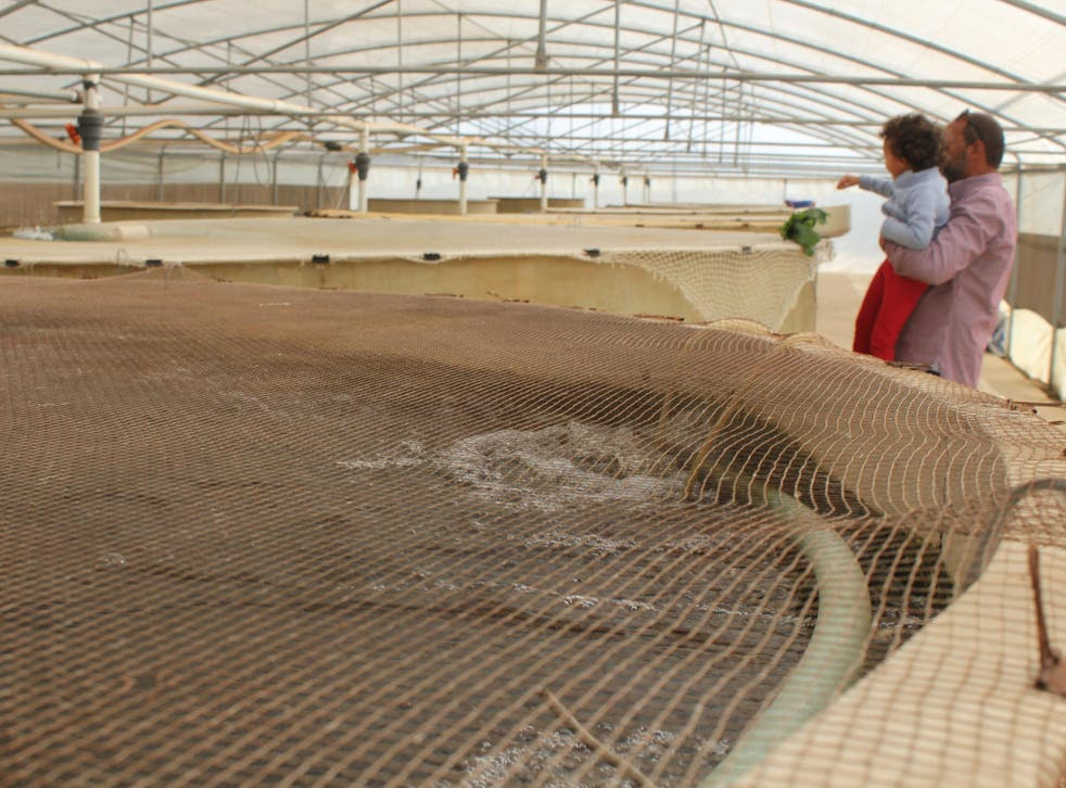 Tanks are filled with fish that 'help feed the plants', Faris Farrag says