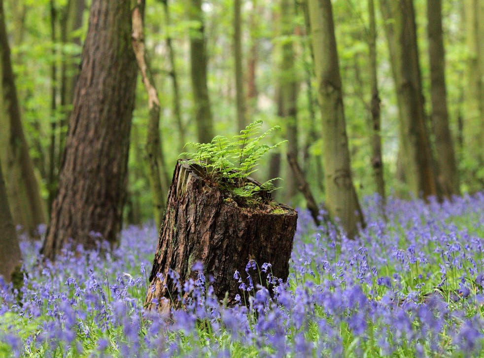 In total, 62,000 acres of forest will be planted between Liverpool and Hull