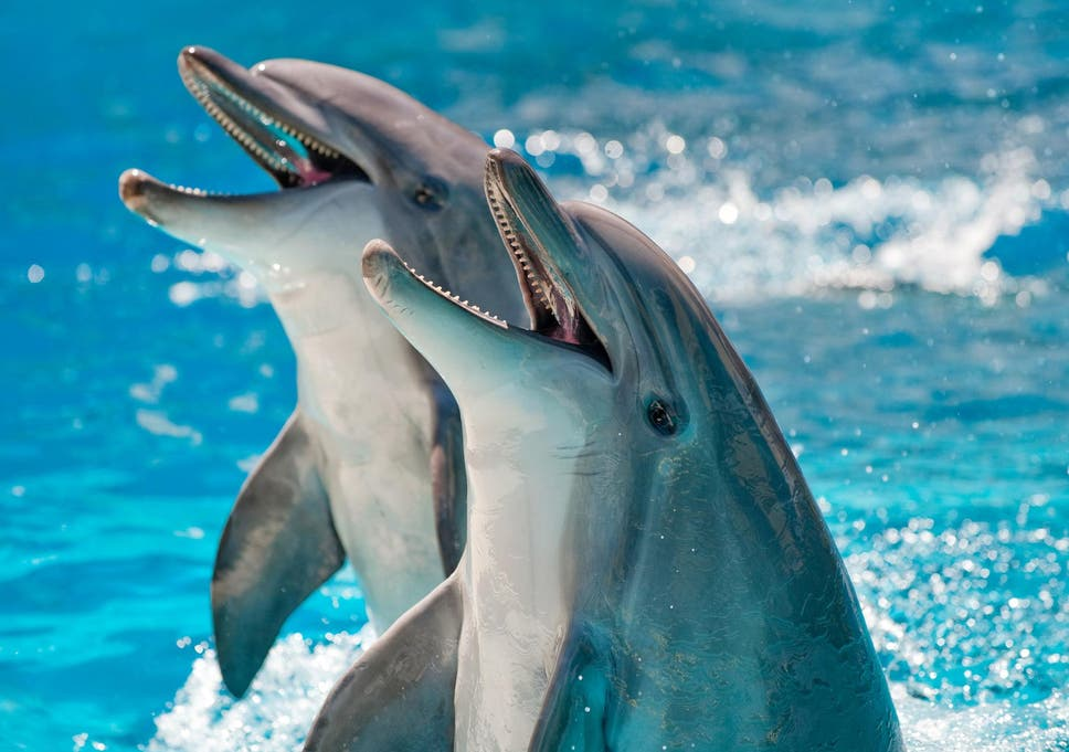 scientists use artificial intelligence to eavesdrop on dolphins