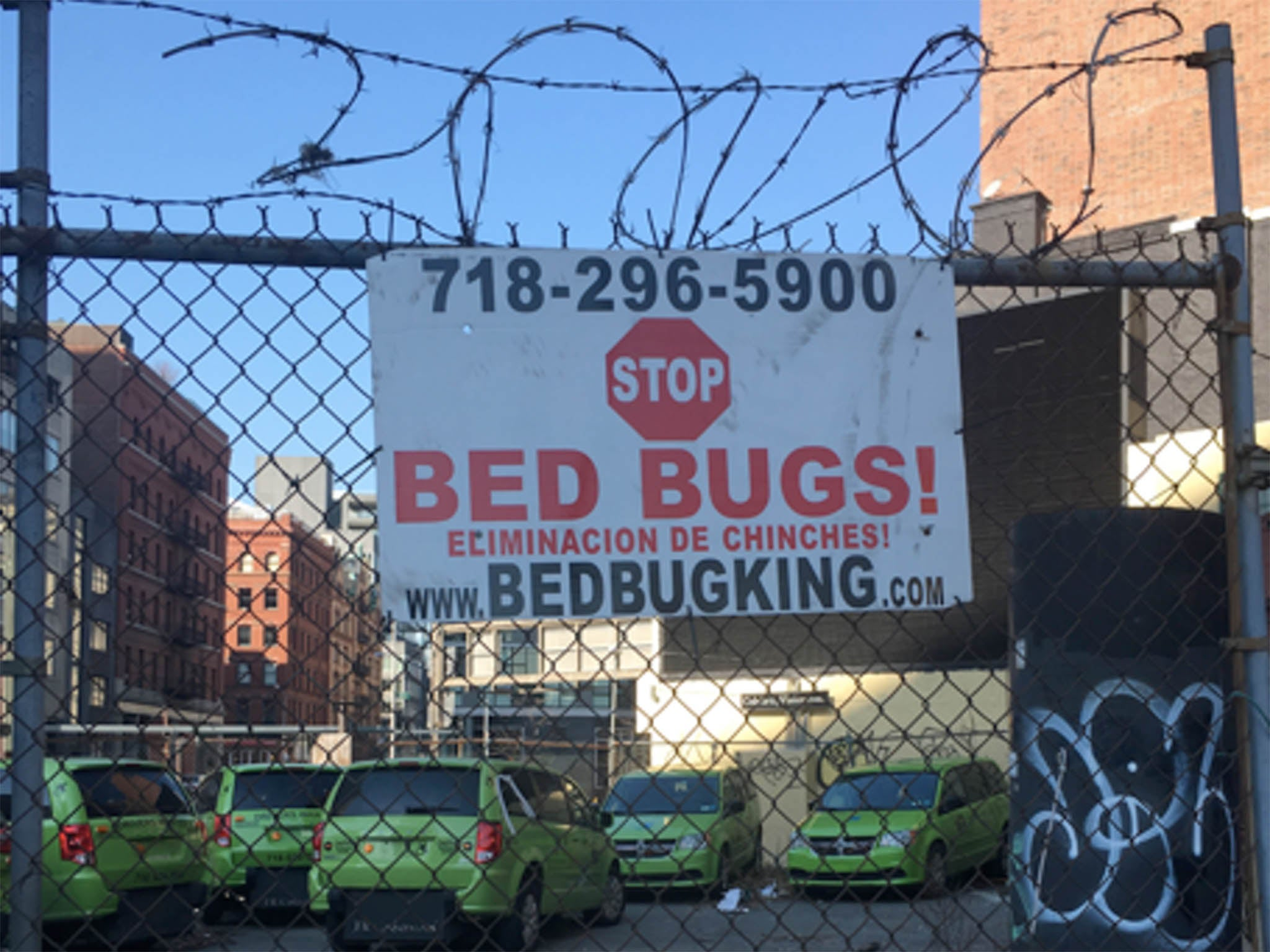 Bedbugs are back – here\'s how one Scottish neighbourhood is learning ...