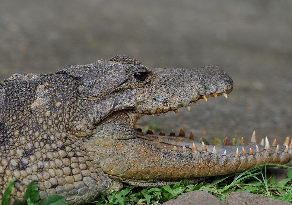 crocodile eats woman and her five year old baby in uganda the
