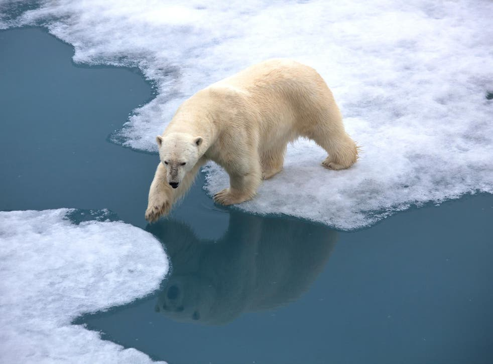 Significant reductions in sea ice pose a threat to the animals that call the Arctic their home