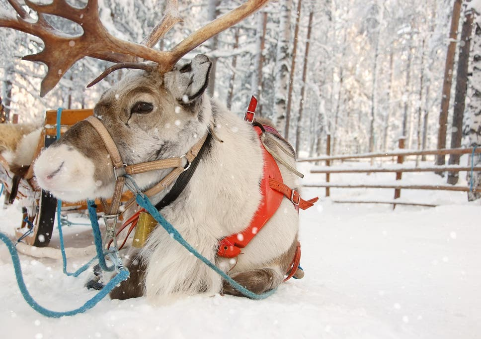 Science proves Santas reindeer are actually all female The