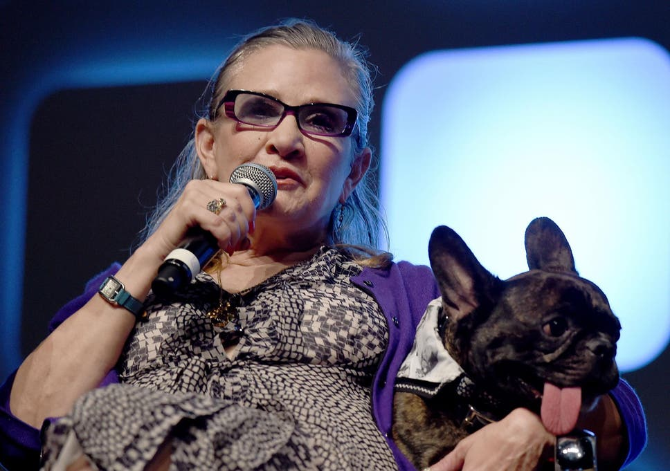 Carrie Fishers Dog Gary Went To A Last Jedi Screening And Perked
