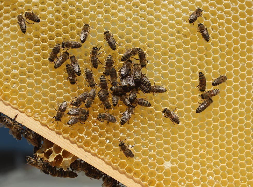 Honey bees may be more at risk from pesticides than previously imagined thanks to the low sugar diets they often eat