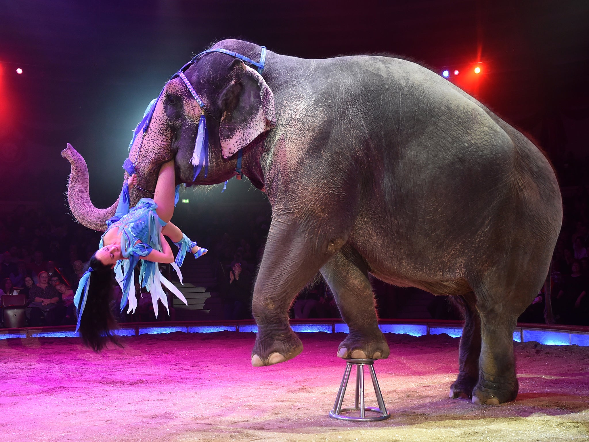 Animals to be banned in circuses in England