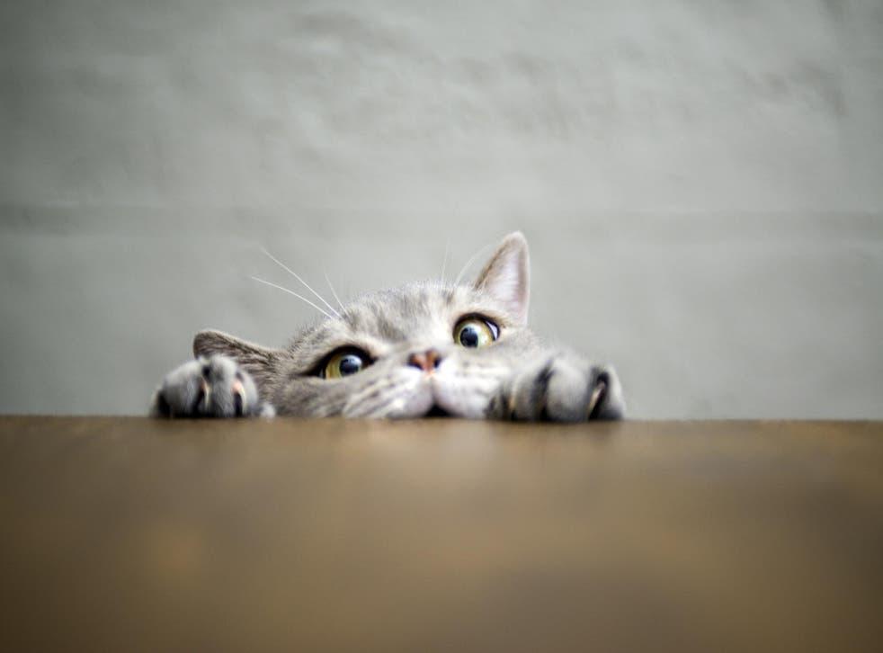 Debunk your cat's mysterious messages