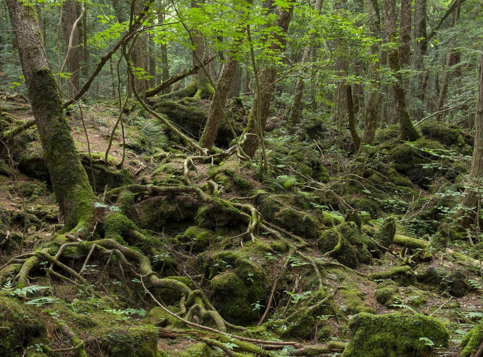 Depictions of Aokigahara Forest in popular culture have romanticised suicide and hinder prevention efforts