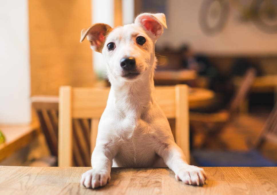 New York to open its first dog cafe | The Independent