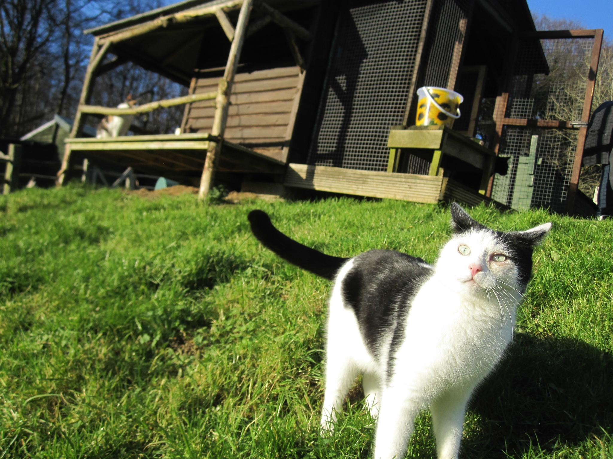 Cats And Hunting At Home