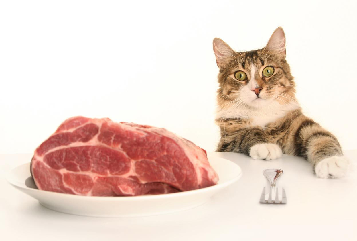 Raw meat pet foods pose risk to animal and human health, finds study