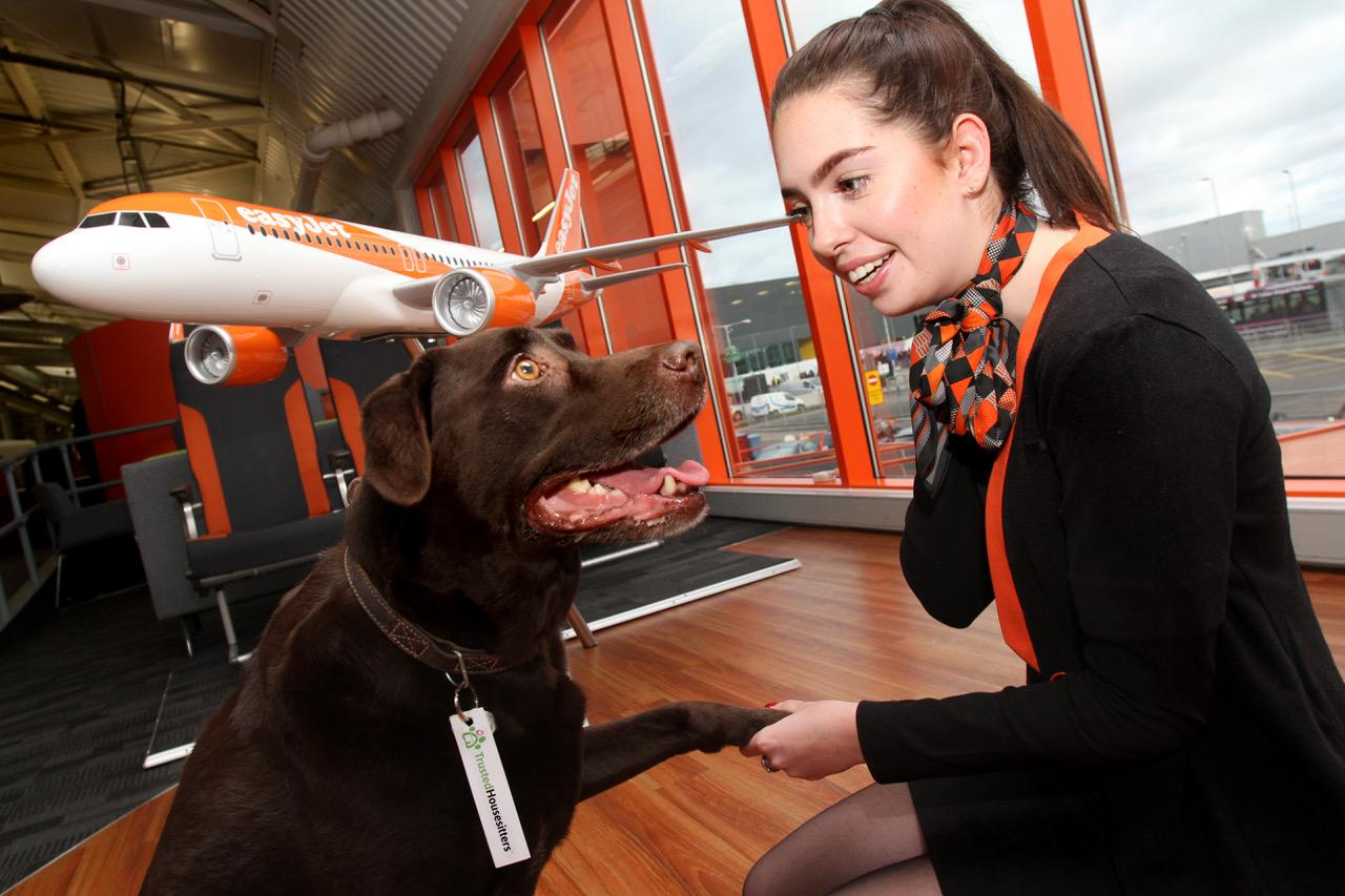 EasyJet launches pet house-sitting service for holidaymakers