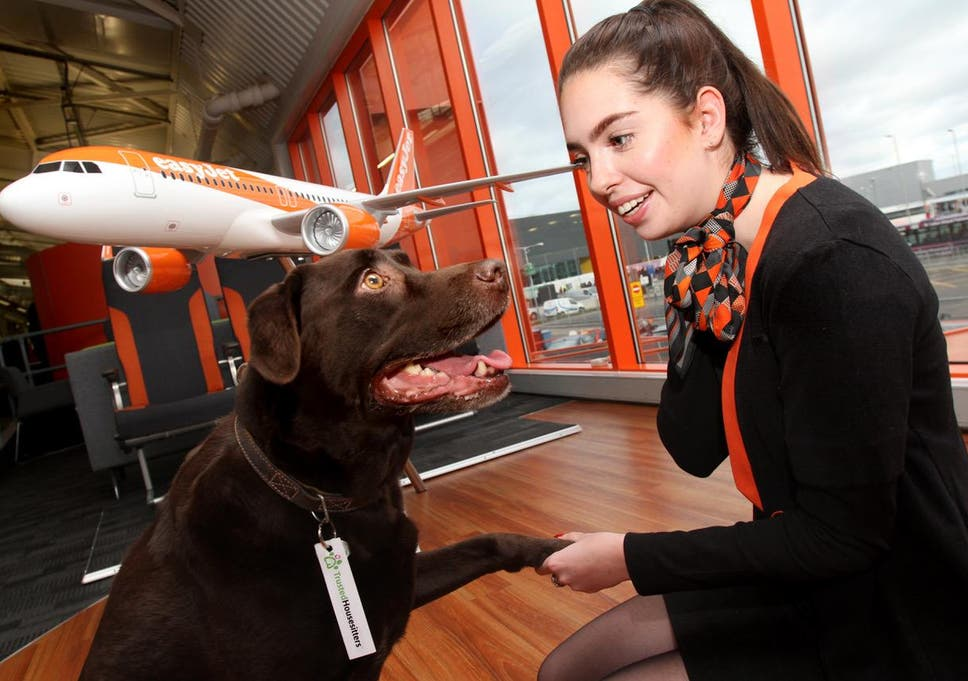 Easyjet Launches Pet House Sitting Service For Holidaymakers The