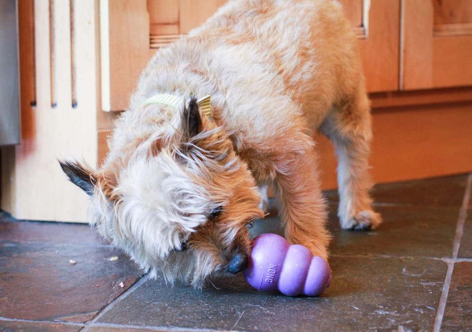 11 Best Dog Toys The Independent