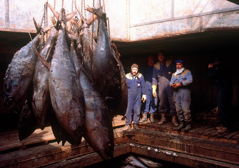 Stop eating cod and tuna in favour of more sustainable fish