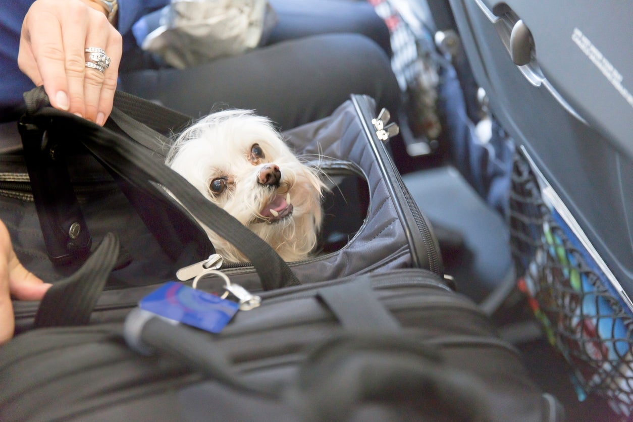 Delta Air Lines to crack down on emotional support animal use on flights