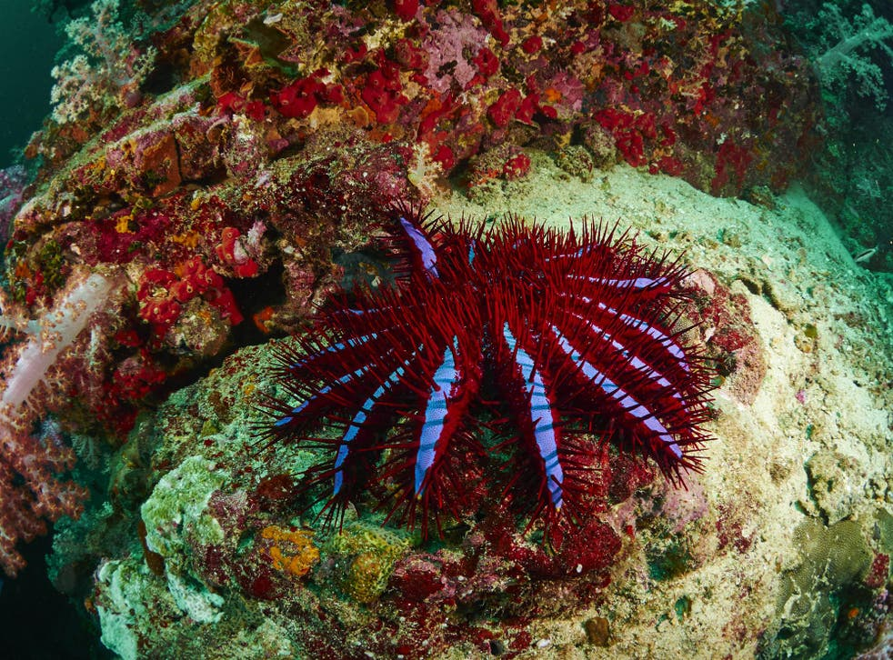 Funding will go towards combating the outbreak of crown-of-thorns starfish on the Great Barrier Reef, which feed on coral and contribute to its decline