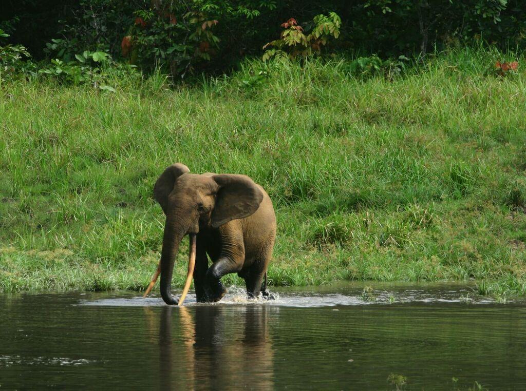 New TV show tells of capture of Gabon ivory smuggling gang