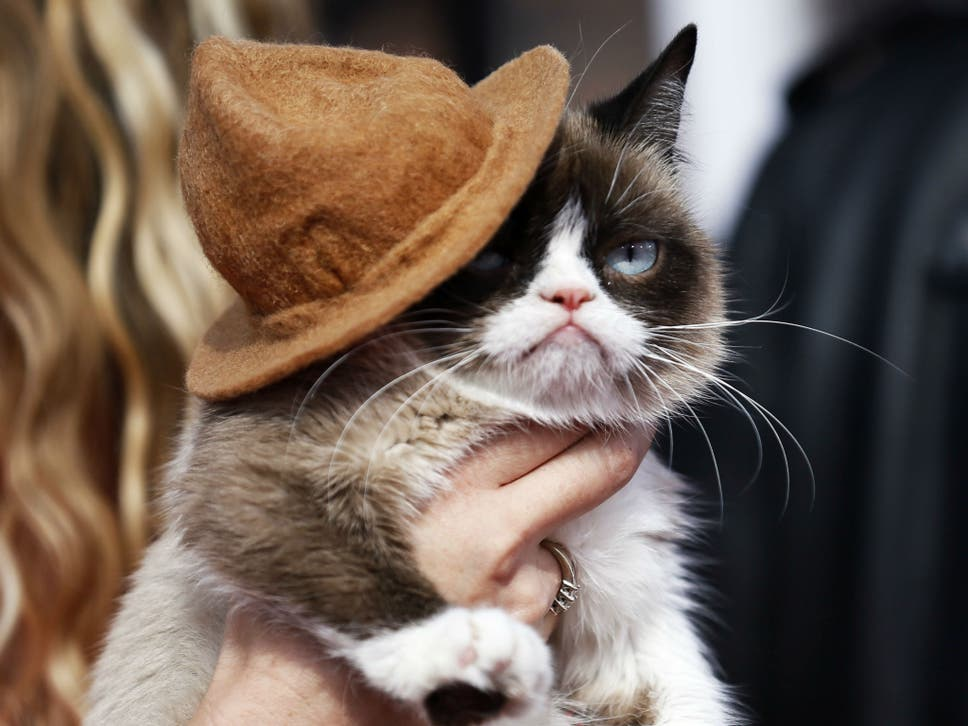 Grumpy cat wins 710000 payout in copyright dispute over use of grumpy cat arrives at the 2014 mtv movie awards in los angeles california thecheapjerseys