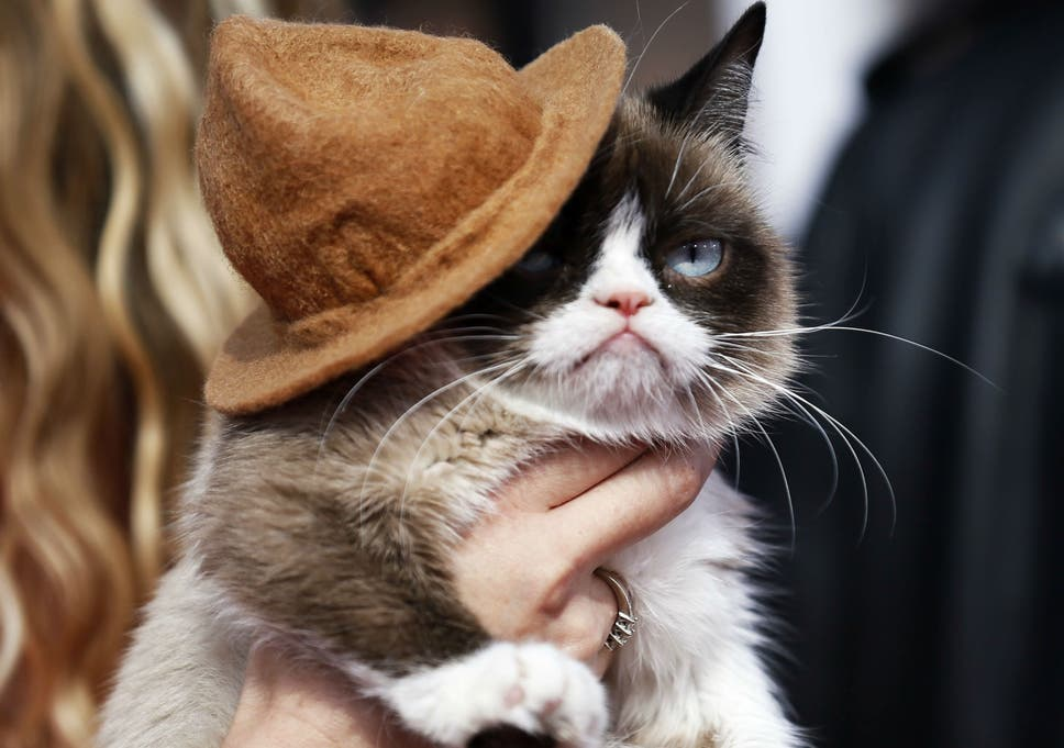 Image of: Twitter Grumpy Cat Arrives At The 2014 Mtv Movie Awards In Los Angeles California Sky News Grumpy Cat Wins 710000 Payout In Copyright Dispute Over Use Of