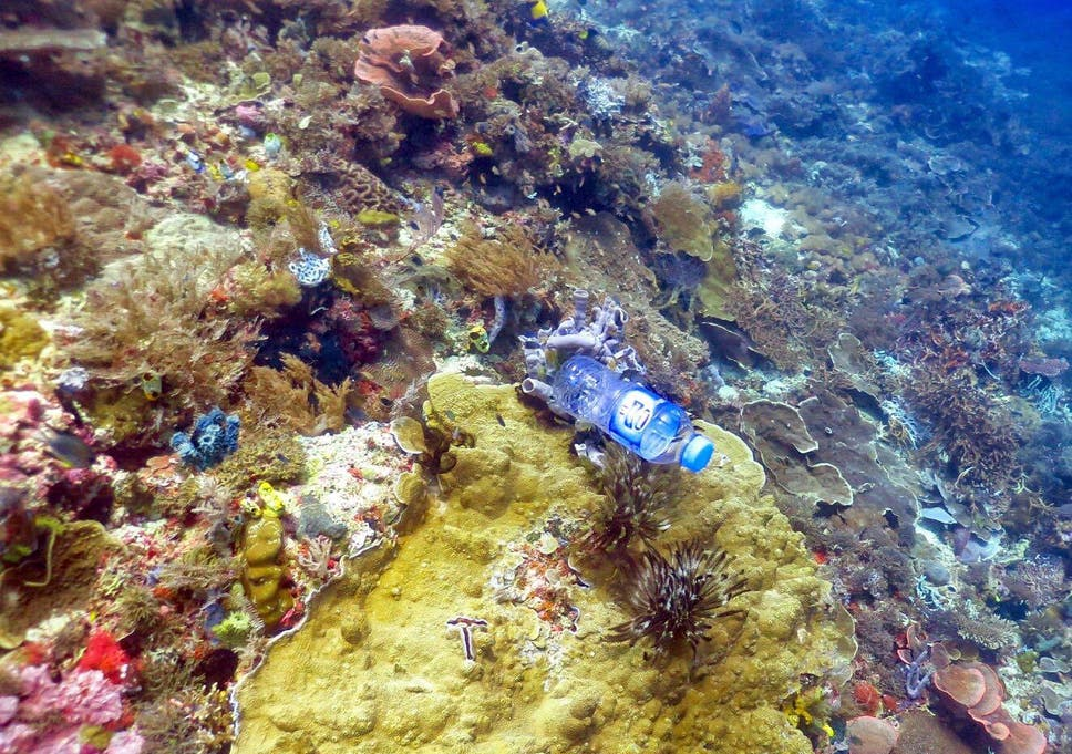 Plastic Pollution Is Killing Corals By Increasing Risk Of Disease  Scientists Studying Reefs In The Asiapacific Region Found That Corals Were  Far More Likely Essays On Science And Technology also English Essay Books  Essay Writing High School