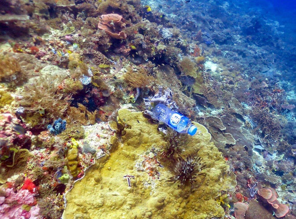 Scientists studying reefs in the Asia-Pacific region found that corals were far more likely to be diseased if they were in contact with plastic