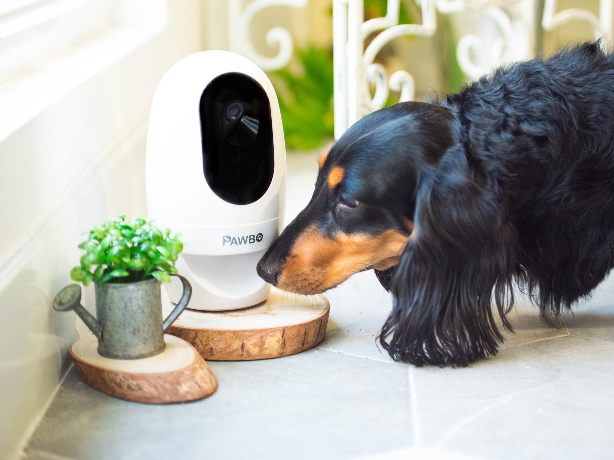 7 best pet cameras