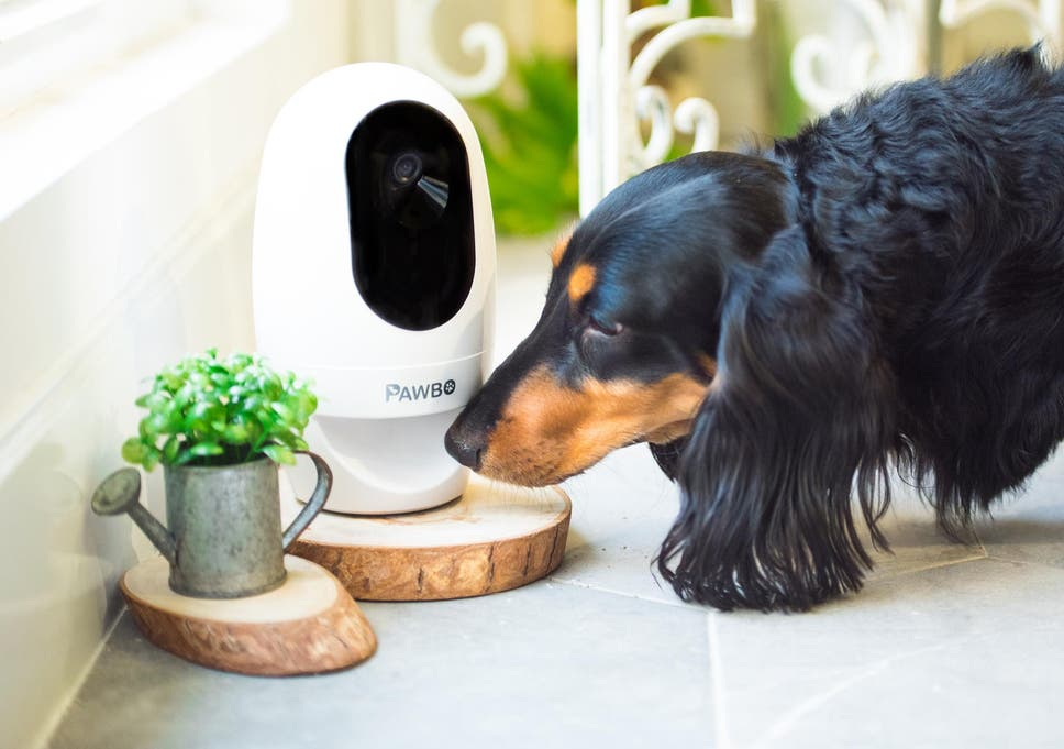 Keep An Eye On Your Four Legged Friends While Away With A Clever Piece Of  Pet Tech