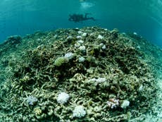 Fish Populations In Great Barrier Reef Collapse After