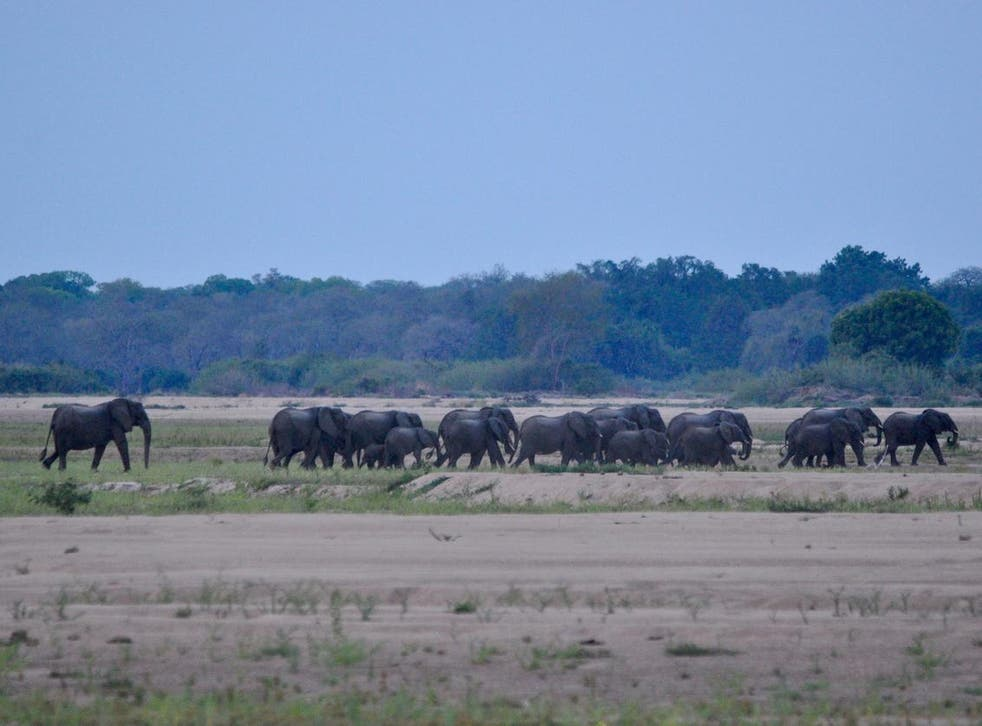 A herd of elephants in Mozambique's Niassa National Reserve