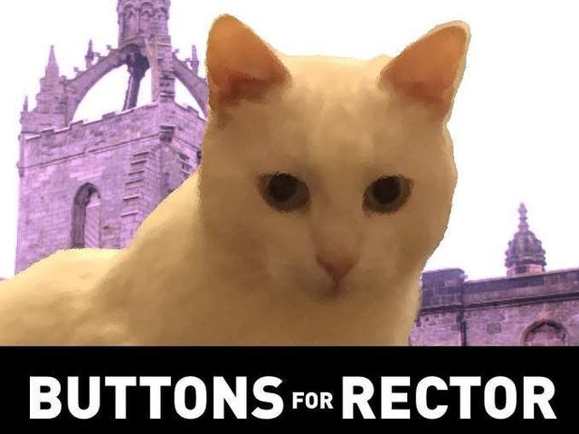 Buttons, a popular white cat who lives on the campus of the University of Aberdeen