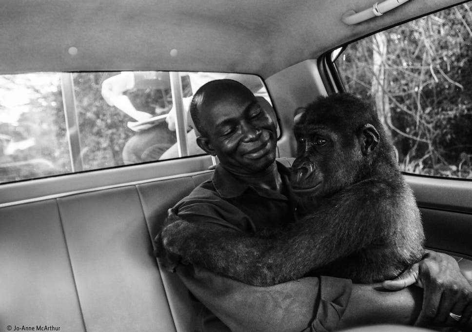 Pikin And Appolinaire Winner Of The Wildlife Photographer Of The Year Peoples Choice Award