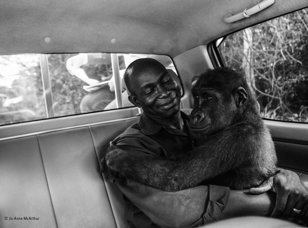'Pikin and Appolinaire' winner of the Wildlife Photographer of the Year People's Choice Award