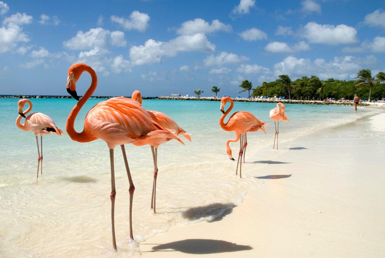 Bahamas resort recruiting for Chief Flamingo Officer