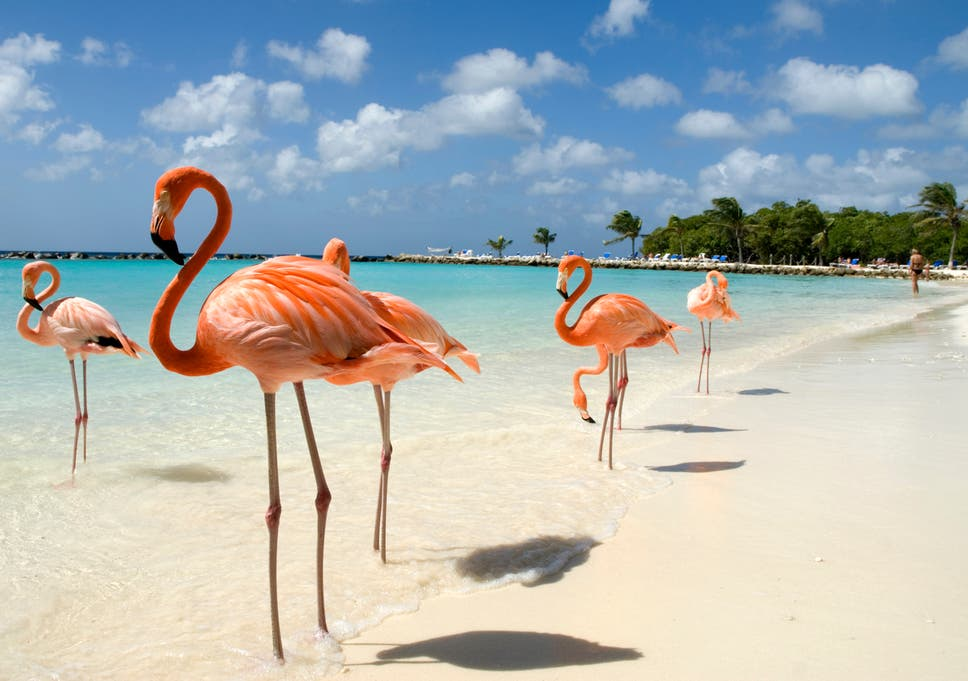 bahamas resort recruiting for chief flamingo officer the independent