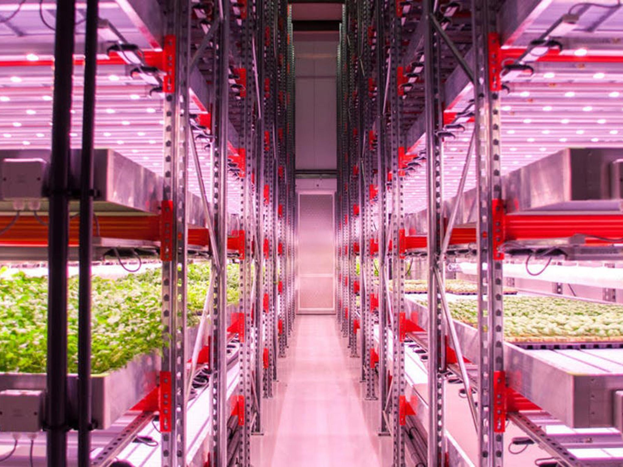 City farmers are learning to grow food without soil or sunlight