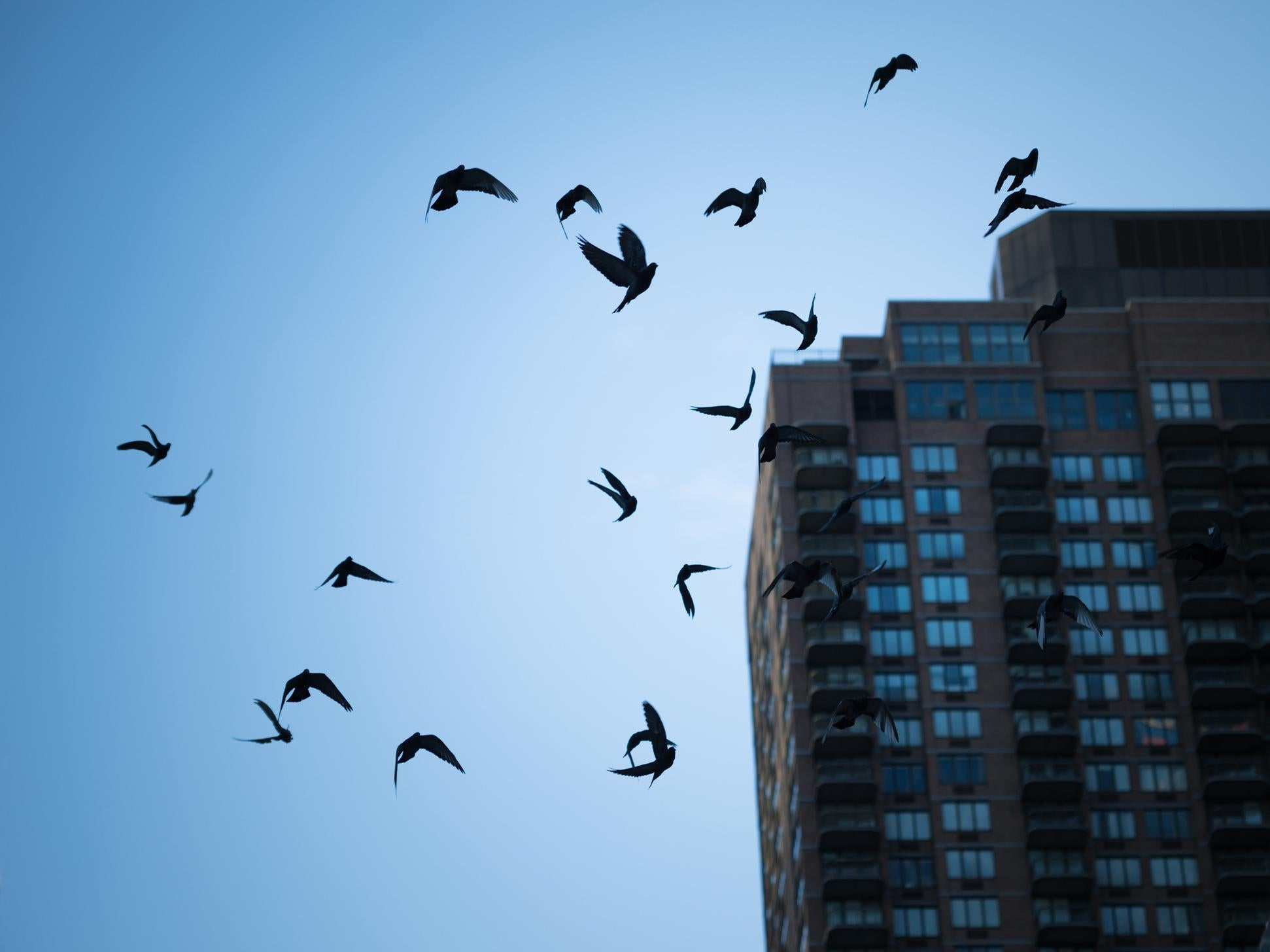Sound Waves Could Be Used To Prevent Millions Of Birds Flying Into Backward When Alarmed Noisy Cricket Mk Ii Amplifier Build Take One Wind Turbines The Independent