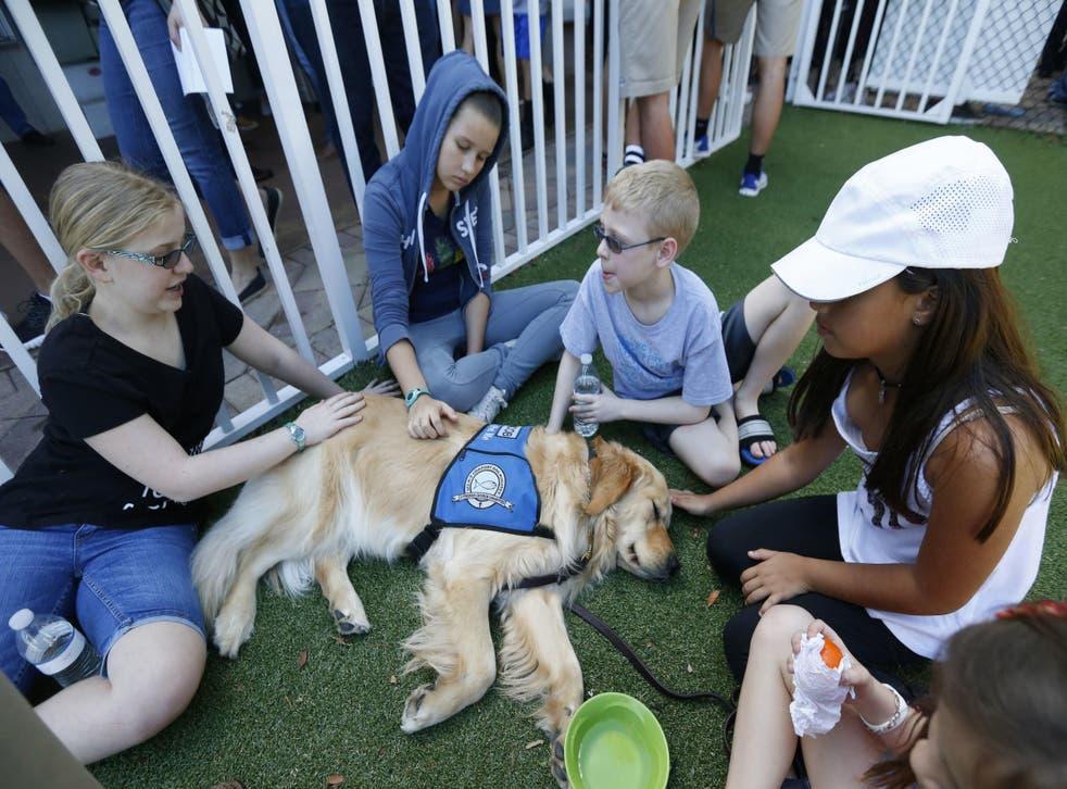 Children pet Jacob the comfort dog