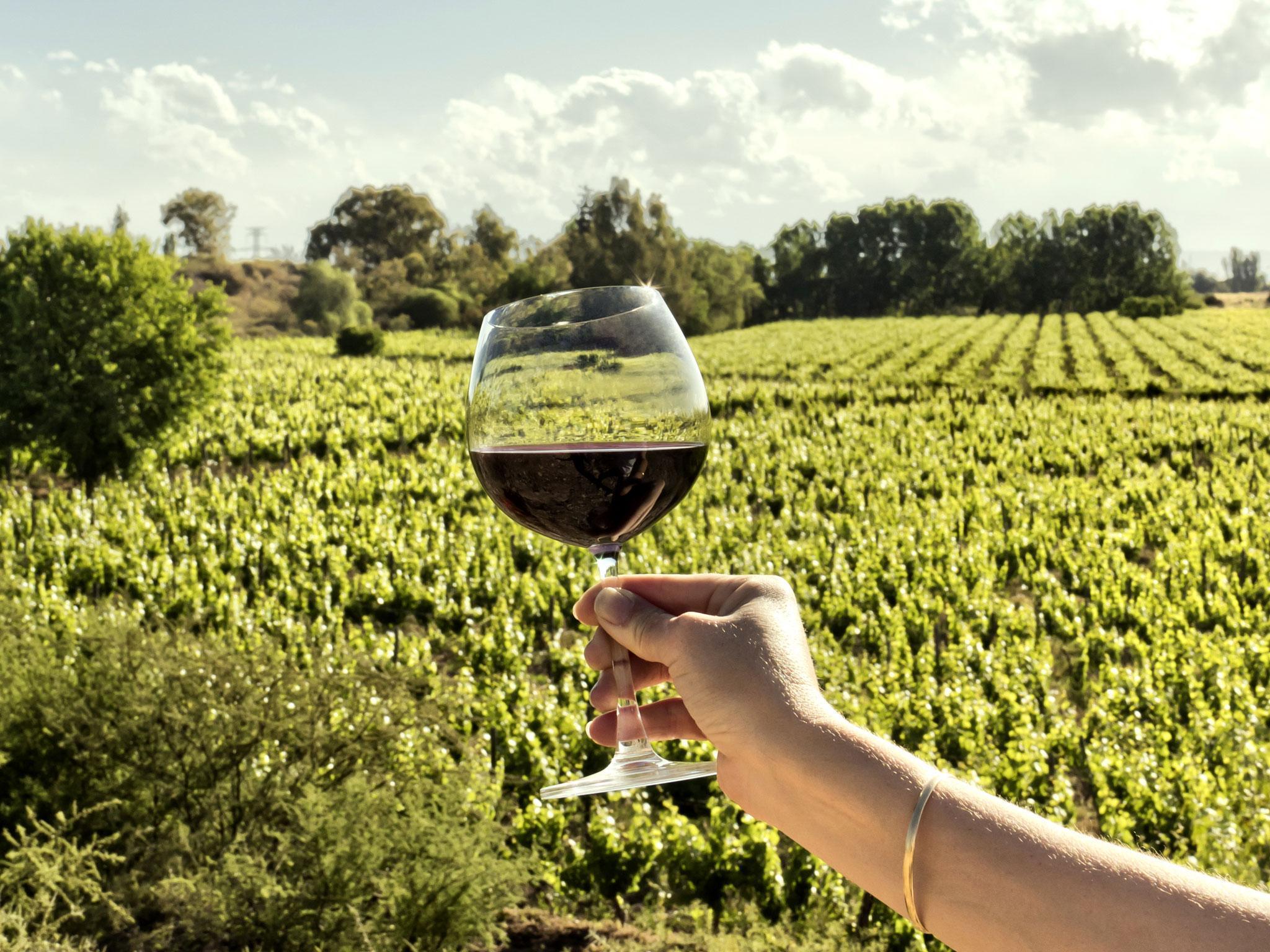 15 best malbec wines