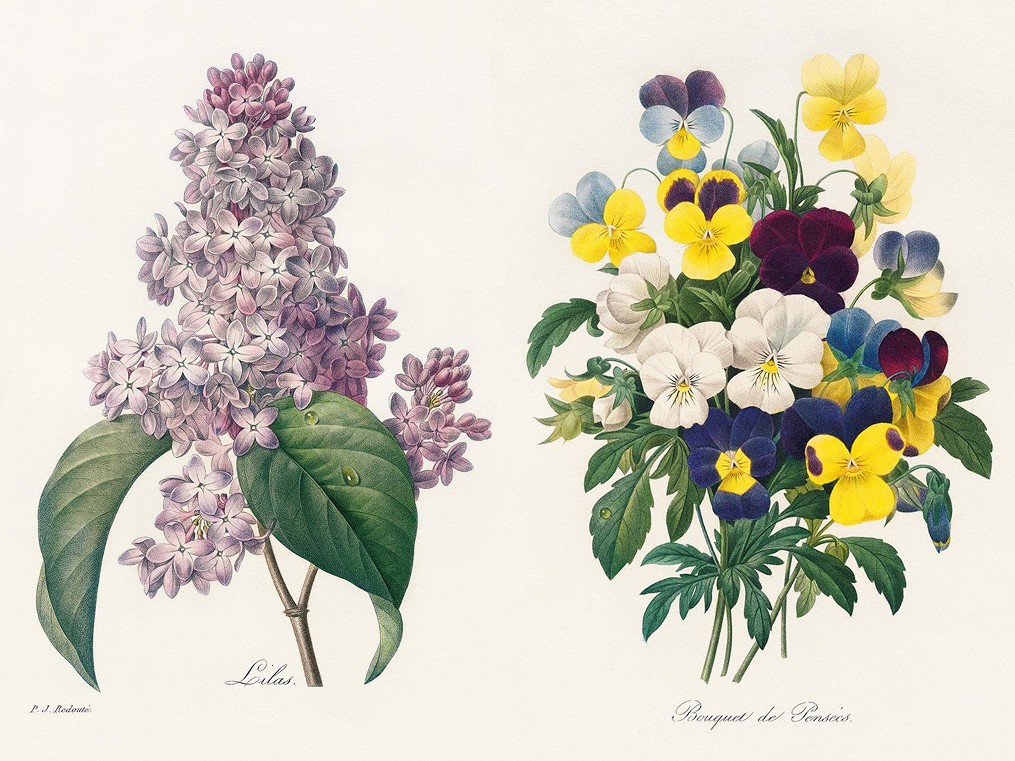 Pierre Joseph Redout The Book Of Flowers Displays The Finest