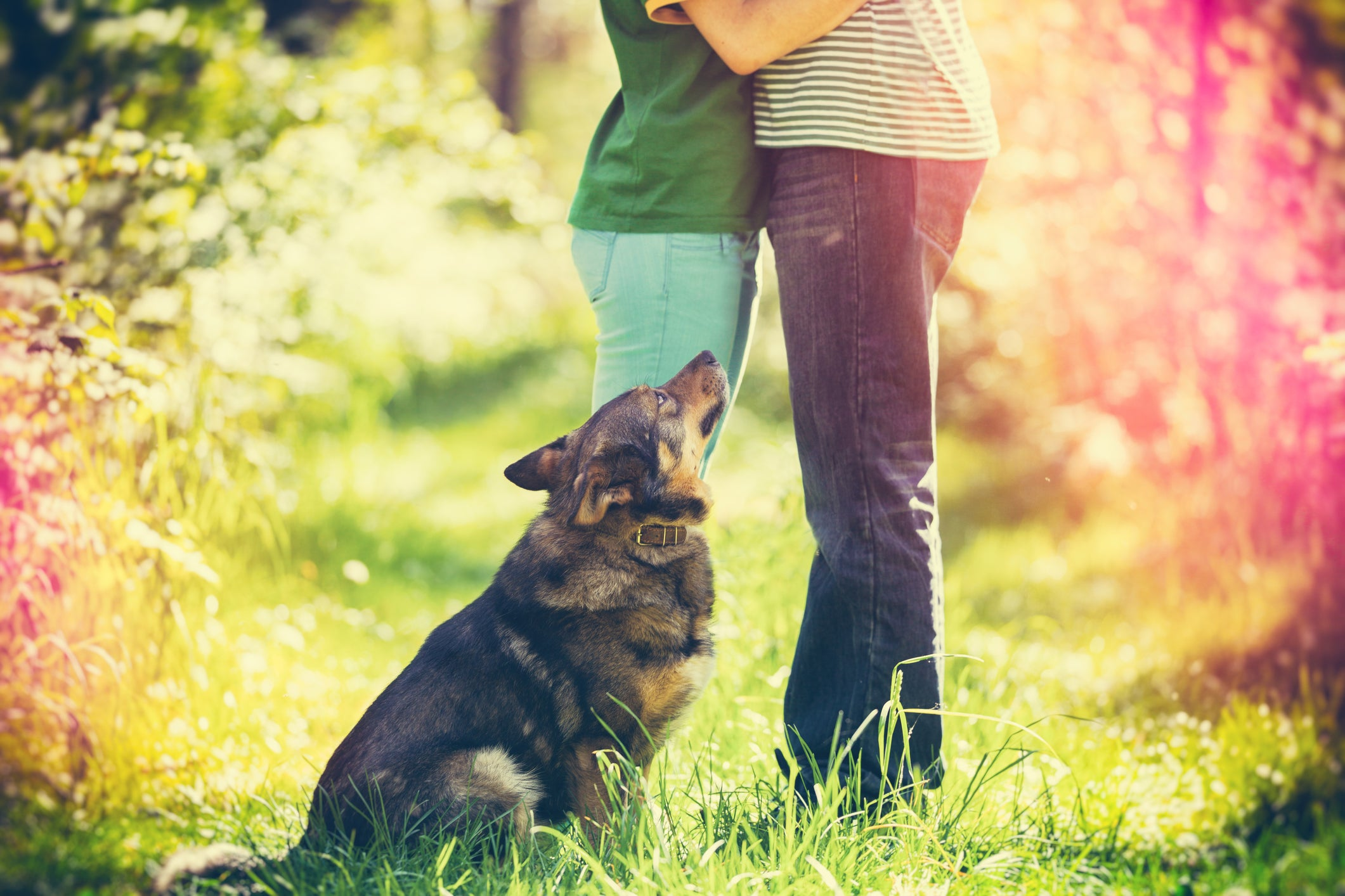 Dogs could help you get a date and make you look more attractive, research finds