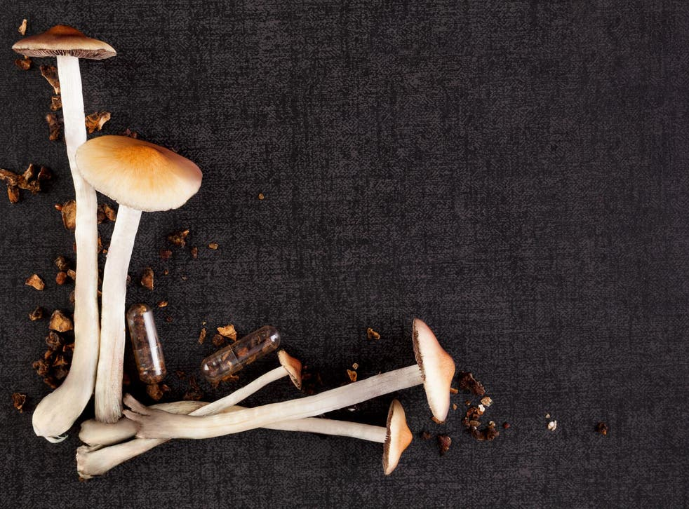 Magic mushrooms may have evolved their psychedelic properties as a defence mechanism